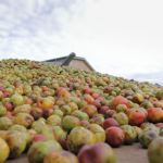 Cornish Orchards Promotional video Cornwall